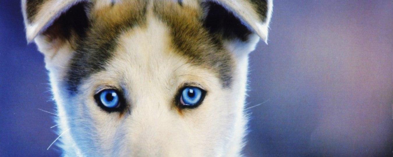 10 Eyes That Don't Belong To Us