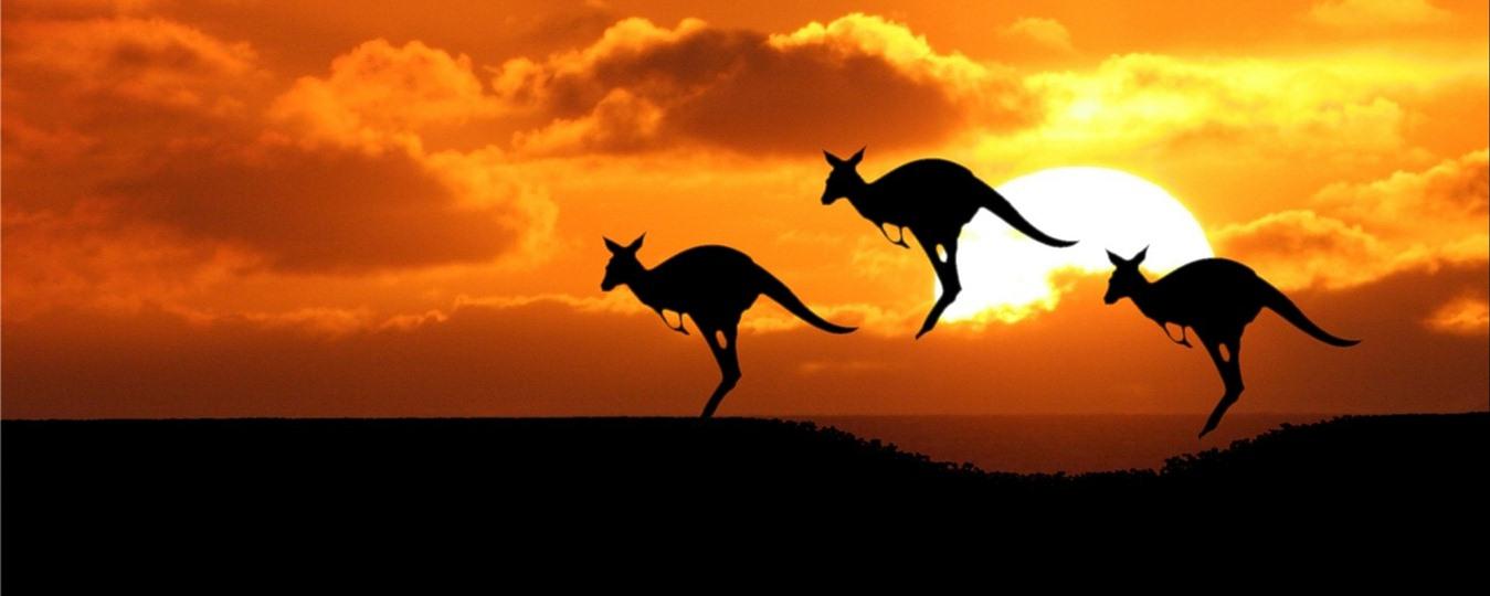 Short Story: Rahul Loves Kangaroos & Its Tail