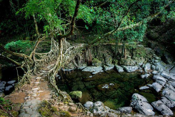 Living Root Bridges - 7 Sisters