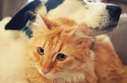 Cat Named Mutt