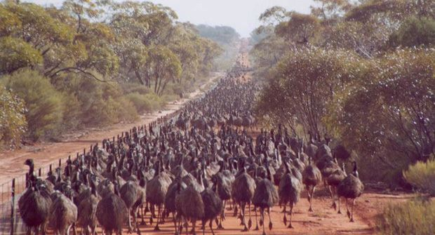 Emu Fleet during emu war