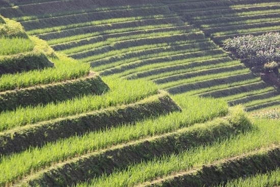 Terrace Farming 1