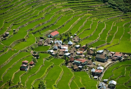 Terrace Farming 3