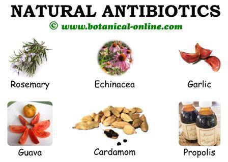 antibiotic-plants-natural