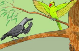 Crows and the Parrots